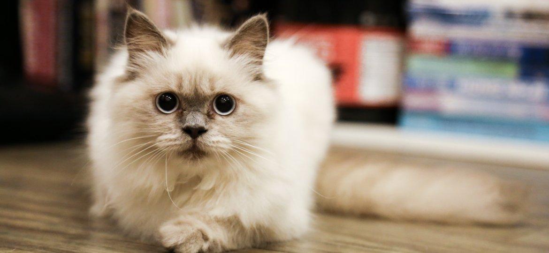 adorable-animal-cat-368890