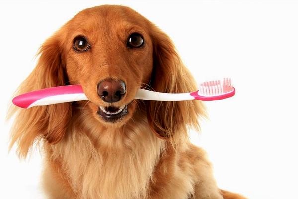 como-escovar-os-dentes-do-seu-cachorro