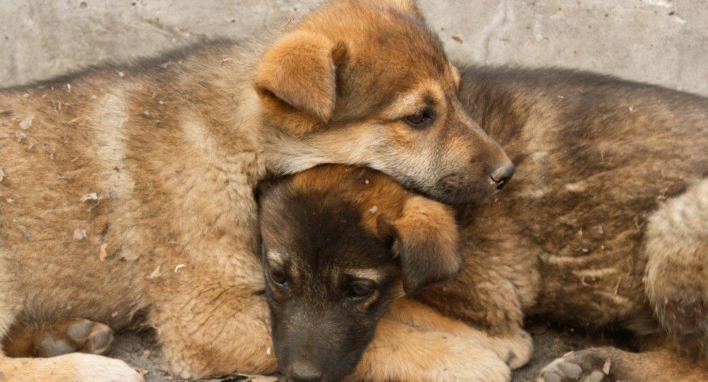 homeless-puppies-lie-on-each-other-to-keep-warm-PJYUCKJ