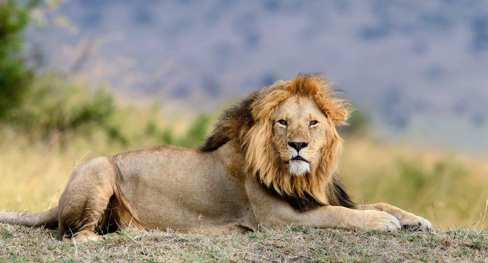 lion-PV85NTA