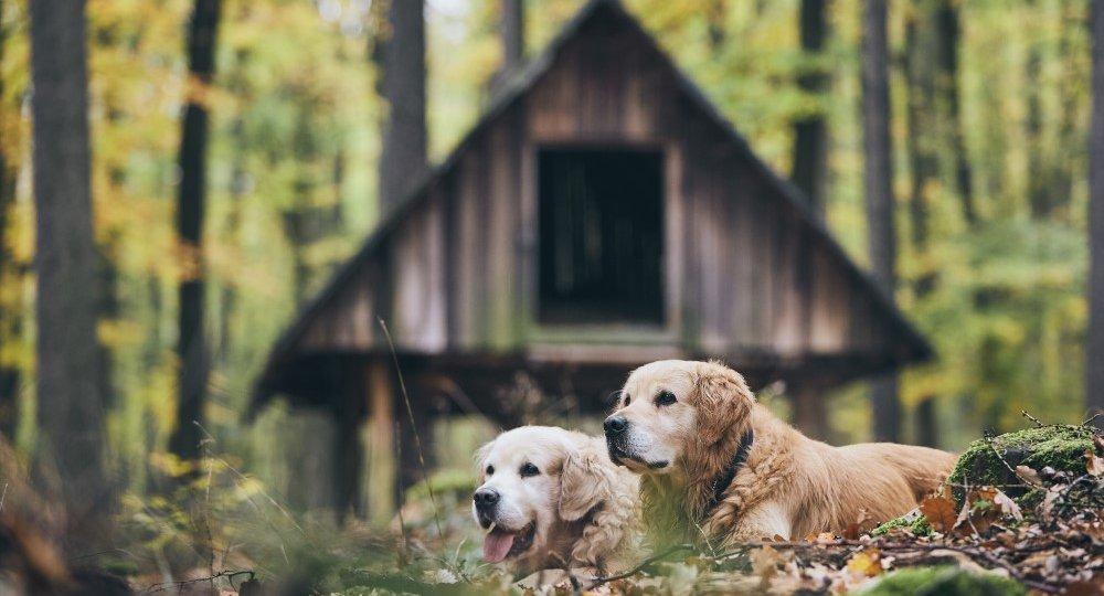couple-of-old-dogs-JGXBNEA